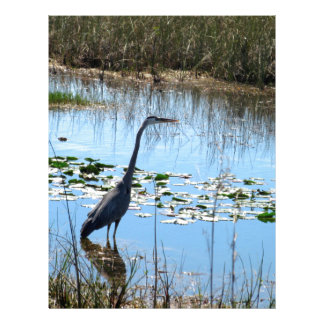 Papel Timbrado Garça-real azul nos Glades