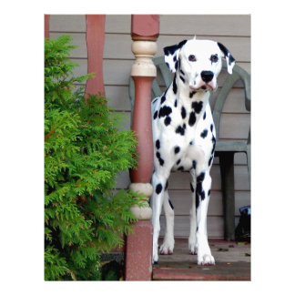 Papel Timbrado Kevin o Dalmatian