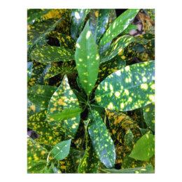 Papel Timbrado Planta do Croton