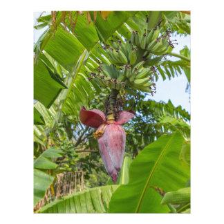 Papel Timbrado Plantação de banana na ilha macilento de Sok Kwu