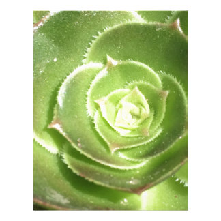 Papel Timbrado Succulent verde