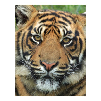Papel Timbrado Tigre adulto