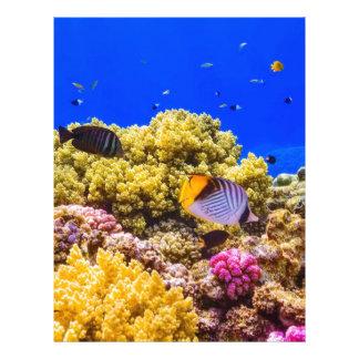Papel Timbrado Um recife de corais no Mar Vermelho perto de