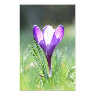 Papelaria Açafrão roxo no primavera