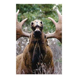 Papelaria alces estranhos do touro
