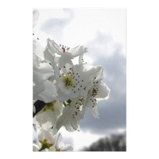 Papelaria Árvore de pera de florescência contra o céu