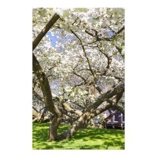 Papelaria Árvores de florescência com a flor branca no