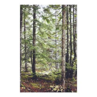 Papelaria Assoalho da floresta de Squamish