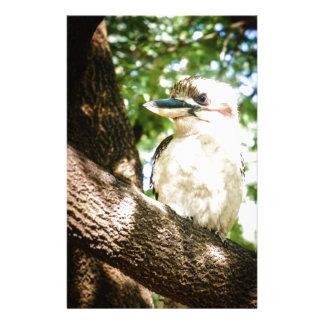 Papelaria Austrália bonito Kookaburra