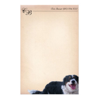 Papelaria Border collie