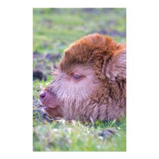 Papelaria Cabeça da vitela escocesa recém-nascida marrom do