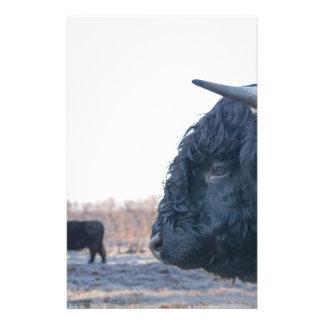 Papelaria Cabeça do escocês escocês do touro preto com vaca