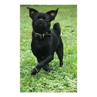 Papelaria Cão brincalhão