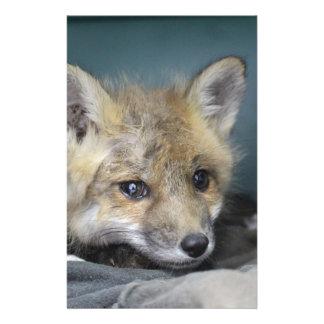 Papelaria Capa de telefone do Fox