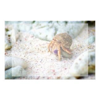 Papelaria Caranguejo da areia, Curaçau, ilhas das Caraíbas,