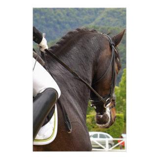 Papelaria Cavalo Dressage