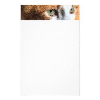 Papelaria Close up do gato de gato malhado