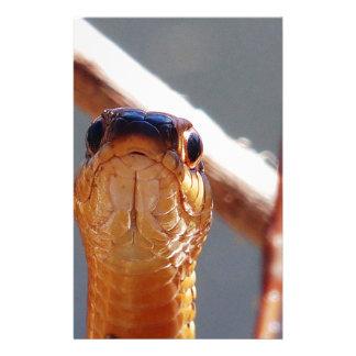 Papelaria cobra