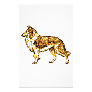 Papelaria Collie