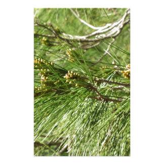 Papelaria Cones imaturos do homem ou do pólen do pinheiro
