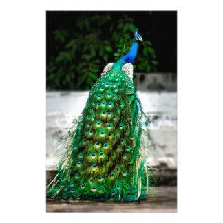 Papelaria cores bonitas da arte da pena do pavão