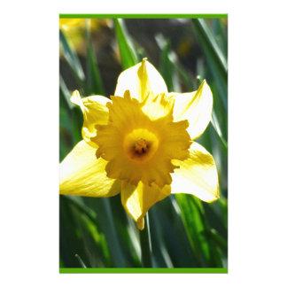 Papelaria Daffodil amarelo 03.0.g