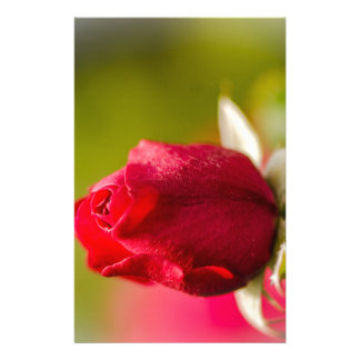 Papelaria Design ascendente próximo da rosa vermelha