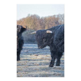 Papelaria Dois escoceses escoceses pretos no prado congelado