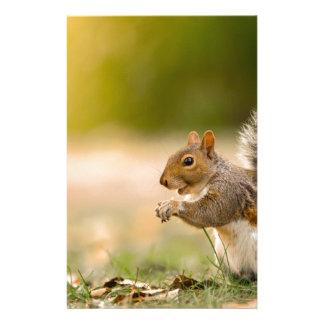 Papelaria Esquilo com fome
