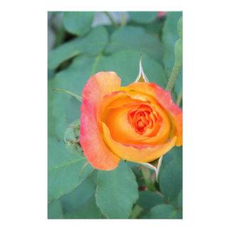 Papelaria flor alaranjada do rosa amarelo