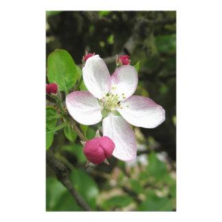 Papelaria Flor cor-de-rosa da maçã no primavera. Toscânia,