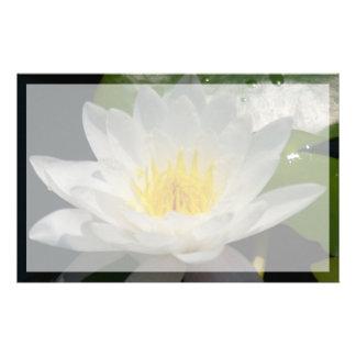 Papelaria Flor de Lotus branco Waterllly