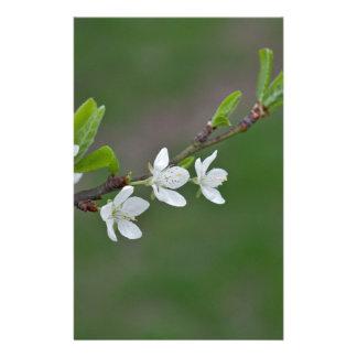 Papelaria Flores da árvore de cereja