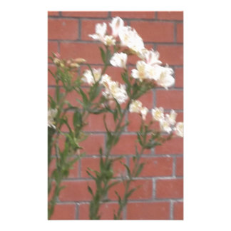 Papelaria Flores no tijolo