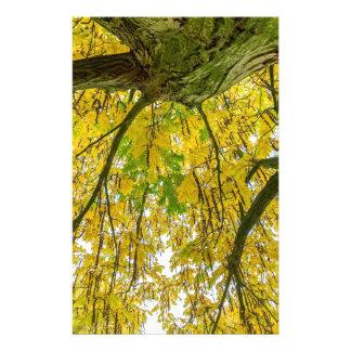 Papelaria Folhas e ramos da árvore de baixo na queda