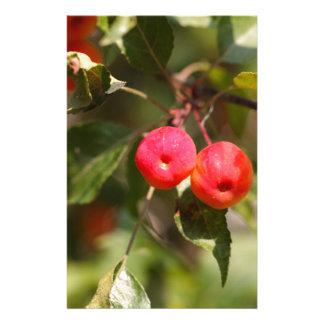 Papelaria Frutas de uma árvore de maçã selvagem
