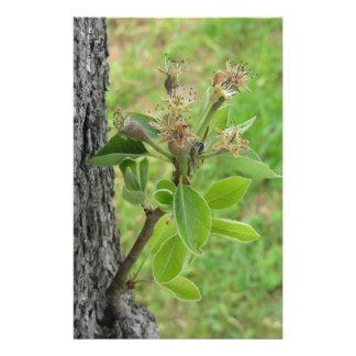 Papelaria Galho da árvore de pera com os botões no primavera