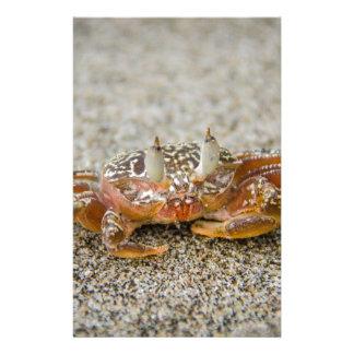 Papelaria Garras do caranguejo