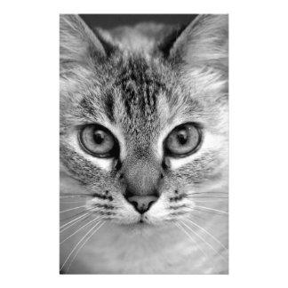 Papelaria gato