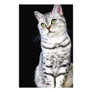 Papelaria Gato britânico adulto do cabelo curto no fundo