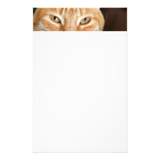 Papelaria Gato de gato malhado alaranjado