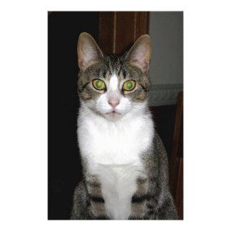 Papelaria Gato de gato malhado com os olhos verdes grandes