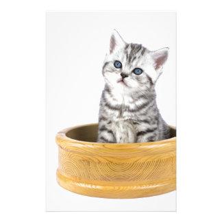 Papelaria Gato de gato malhado de prata novo que senta-se na