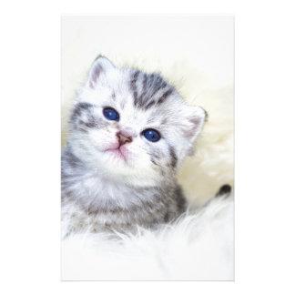 Papelaria Gato novo velho de três semanas que senta-se na