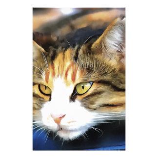 Papelaria Gato satisfeito
