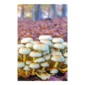 Papelaria Grupo de cogumelos na floresta da faia da queda