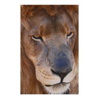 Papelaria História dos leões em África do Sul