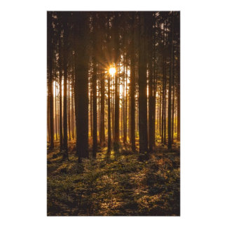 Papelaria Ideia de árvores pretas e de Sun