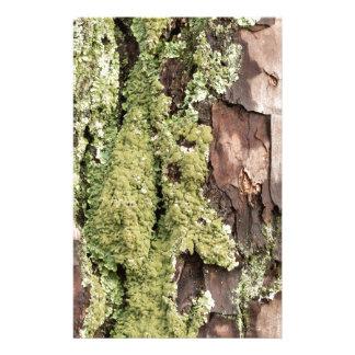 Papelaria Latido de pinheiro da costa leste molhado da chuva