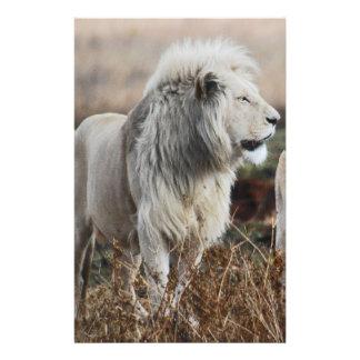 Papelaria Leão de África do Sul como o rei